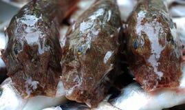 rybi świeży siluriformes Zdjęcie Royalty Free