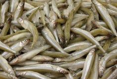 rybi świeży smelt Zdjęcie Royalty Free