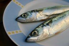 rybi świeży talerz Fotografia Stock