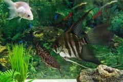 Rybi akwarium Obrazy Royalty Free
