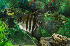 Rybi akwarium Obrazy Stock