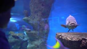 Rybi akwarium niebezpieczny rybi dopłynięcie w akwarium w oceanarium Kolorowy akwarium zbiornik wypełniał z kamieniami, gałęzatka zbiory wideo