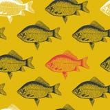 Rybi crucian karp, odosobniony czarny i biały, boczny widok, Ilustracji