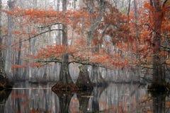 Rybi Czarnego crappie Pomoxis nigromaculatus łapiący na jo-jo Automatycznym połowie Nawija Piękni łysi cyprysowi drzewa w jesieni obraz stock