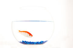 rybi czerwony biel Obraz Royalty Free