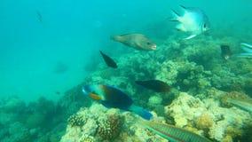 rybi czerwony morze Stubarwny rybi pływanie nad koralami Obrazy Royalty Free