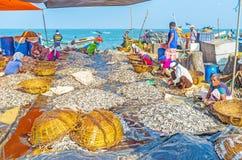 Rybi czyściciele Zdjęcie Stock
