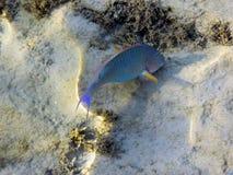 Rybi denny gałęzatka piaska plaży słońce fotografia stock