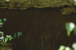 Rybi dopłynięcie w jeziorze Rybi dopłynięcie w stawie Zdjęcie Stock