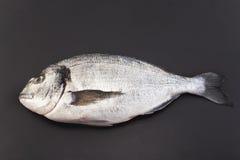 Rybi dorade na czarnym tle zdjęcia royalty free
