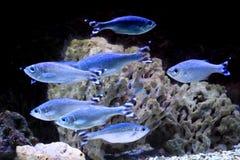 rybi egzota morze Zdjęcia Stock