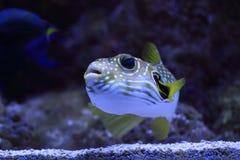 rybi egzota morze Obraz Stock