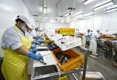 rybi fabryka przerób Fotografia Stock
