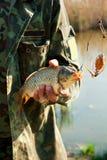 rybi fisher zamknięte rybie ręki Obrazy Stock