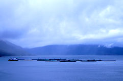 Rybi gospodarstwo rolne w Norwegia obrazy royalty free