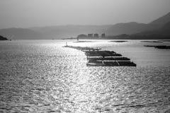 Rybi gospodarstwo rolne w wczesnym poranku blisko Miyajima wyspy, Japonia Czarny i biały wizerunek obrazy royalty free