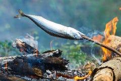 Rybi grill, Scomber, rybi grilla scomber Zdjęcie Royalty Free