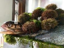 Rybi i denni czesacy Zdjęcie Stock
