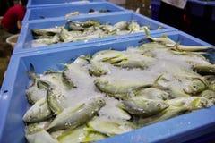 Rybi Importowy rynek w Singapore obraz royalty free