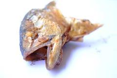 Rybi kierowniczy dłoniak po jeść z lewej strony obraz royalty free