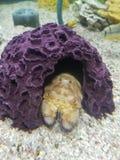 Rybi korala dom obrazy royalty free
