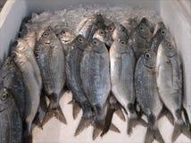 rybi lód Obraz Stock