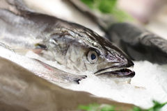 rybi lód Obrazy Stock