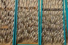 Rybi lying on the beach na sieciach, wysuszonych w słońcu na plaży w Nazare, Po zdjęcie royalty free