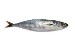 rybi mały Obrazy Royalty Free