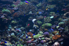 rybi morze obrazy royalty free