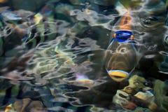 rybi osamotniony obraz stock