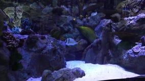 rybi pływacki tropikalny zdjęcie wideo