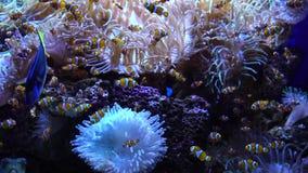 rybi pływacki tropikalny zbiory