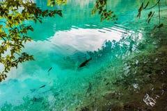 Rybi pływanie w lasowym jeziorze w krysztale - jasna turkus woda Plitvice, park narodowy, Chorwacja fotografia royalty free