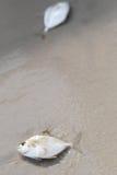 rybi piaskowaty Zdjęcia Stock