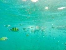 Rybi podwodny Andaman morze Fotografia Stock