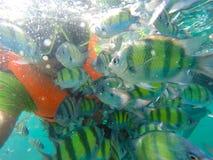 Rybi podwodny Andaman morze Zdjęcia Royalty Free