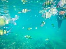 Rybi podwodny Andaman morze Obrazy Stock
