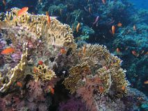 rybi rafowy tłum Fotografia Royalty Free