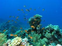 rybi rafowy tłum Zdjęcie Stock