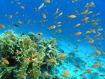 rybi rafowy tłum Fotografia Stock