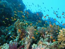 rybi rafowy tłum Zdjęcie Royalty Free