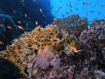 rybi rafowy tłum Zdjęcia Stock