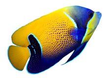 rybi rafowy tropikalny Zdjęcie Royalty Free
