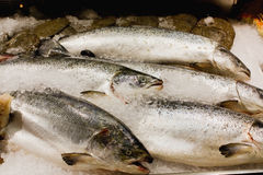 rybi rynek Obraz Royalty Free