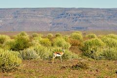 Rybi Rzeczny jar - Namibia, Afryka Zdjęcie Royalty Free