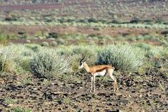 Rybi Rzeczny jar - Namibia, Afryka Obraz Stock