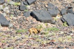 Rybi Rzeczny jar - Namibia, Afryka Obrazy Stock