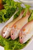 rybi surowy Obraz Stock