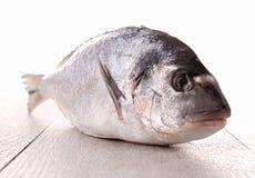 rybi surowy Zdjęcia Stock